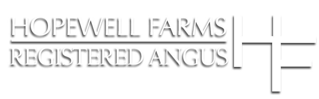 Hopewell Farms | Angus Cattle